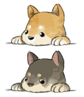 Two Shibo Dogs