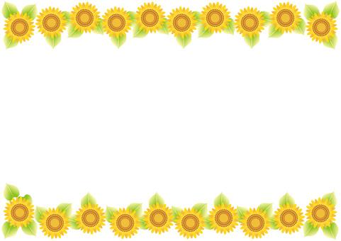 Sunflower 16