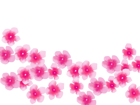 Daily grass pink 2