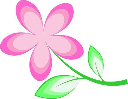 핑크색의 꽃