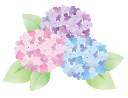 Watercolor hydrangea 03