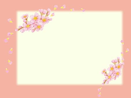 Sakura news
