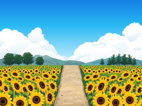 (RGB) Summer sunflower field and whirlpool background 03