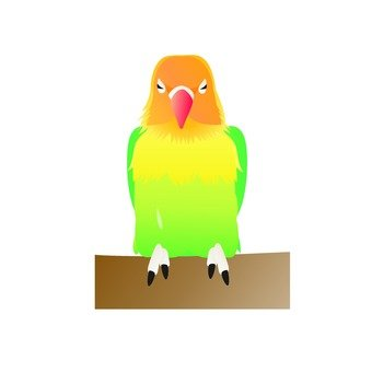 Ruri Koshi button parakeet (stick to branch)