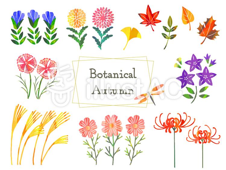 秋の植物のイラスト