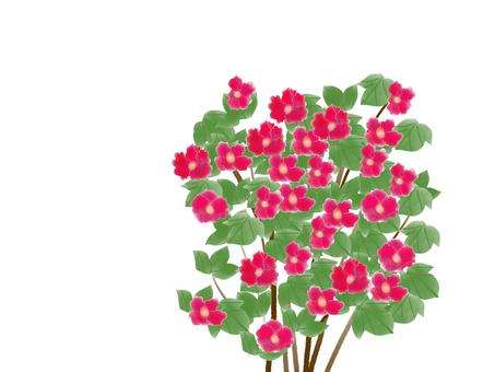 Hibiscus (フ ヨ ウ) 2