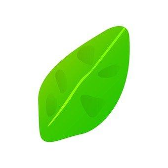 달걀 모양의 잎 2