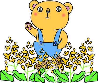 Kumapon and rape blossoms