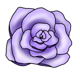 Rose - purple