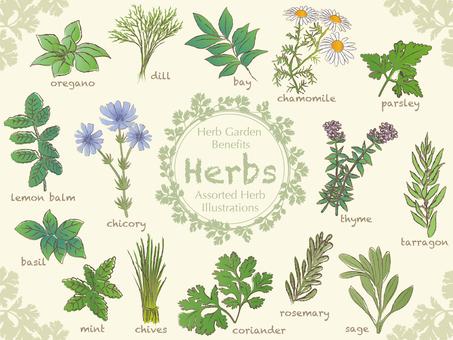 Various Herbs 1