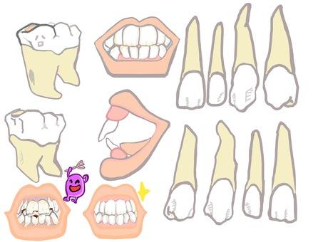 치아의 형태 이모저모