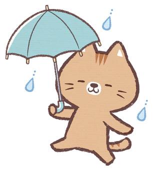 Umbrella size cat