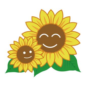 Famous Sunflower
