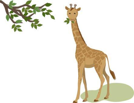 Giraffe leaves