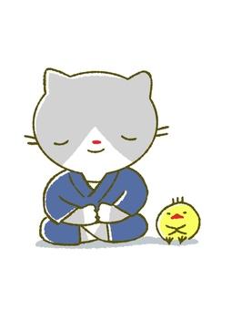 Zazen cat