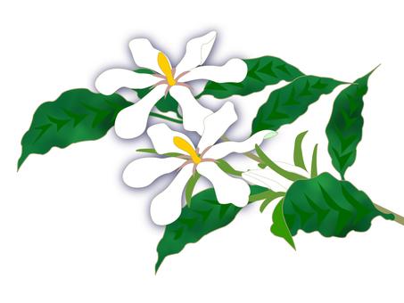 치자 나무 꽃