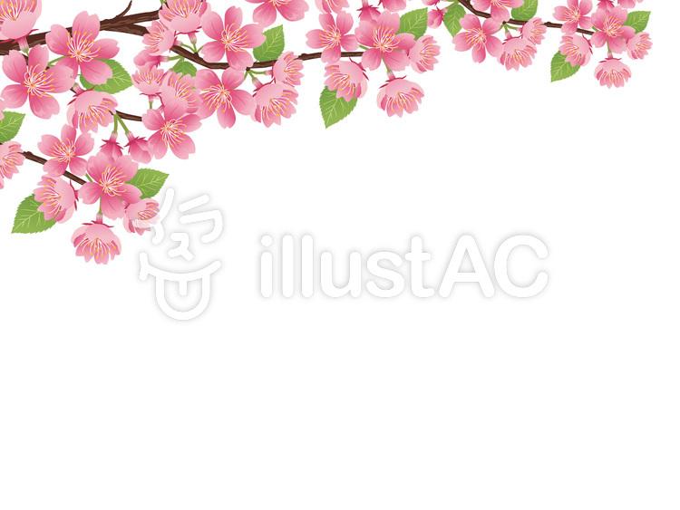春リアルな桜の枝素材挿絵04イラスト No 723196無料イラストなら
