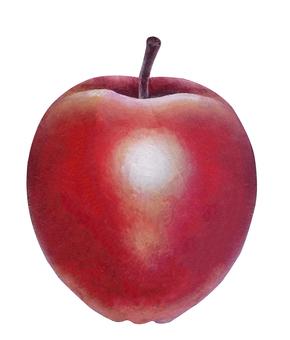蘋果蘋果蘋果蘋果
