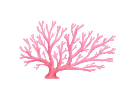 분홍색 산호
