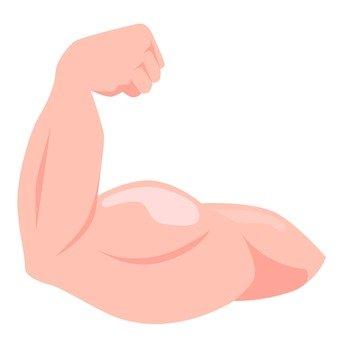 Biceps brachii muscle 1
