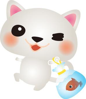 Get a white cat goldfish