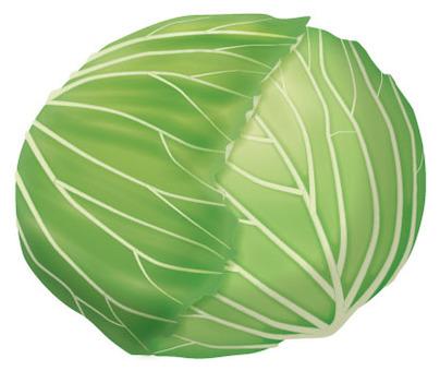 Cabbage 2 / vegetables