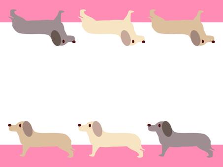 Dog miniature dachshund pink
