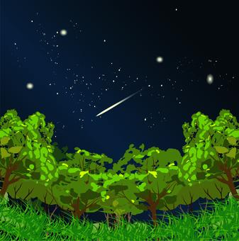 산림 산 잔디 나무 별빛 밤 캠프