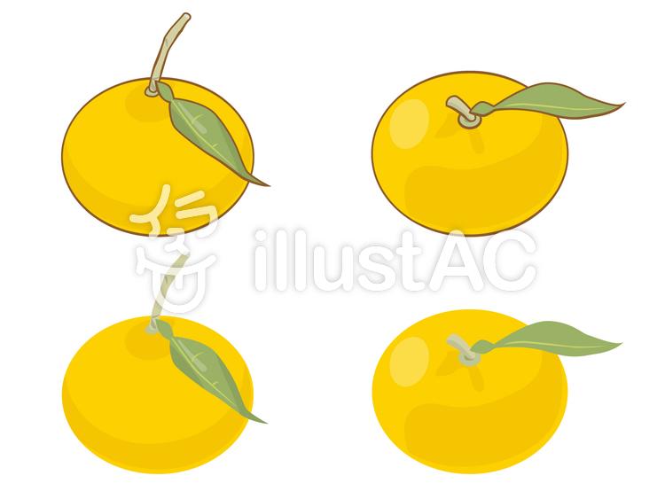食品-柚子のイラスト