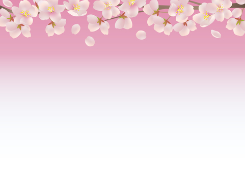 Cherry blossoms in the upward direction (pink background)