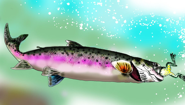 Rainbow trout to swallow a frog