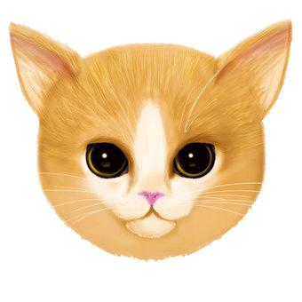 Tea cat (fish eyes)