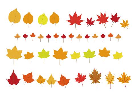 단풍, 단풍 나무 낙엽