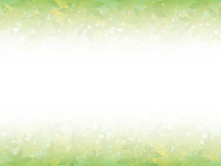 Maple frame (green)