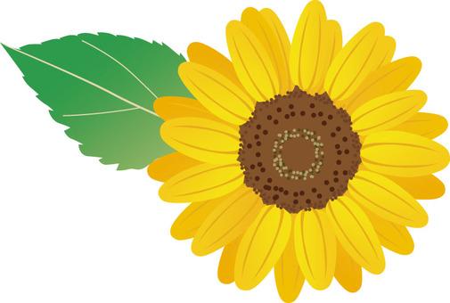 Sun flower flowers