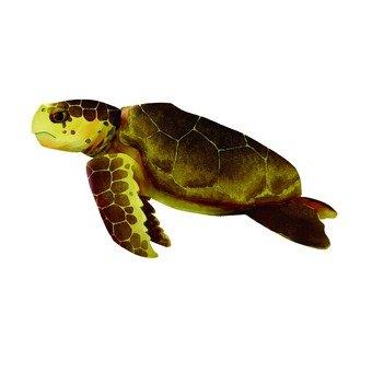 바다 거북 1