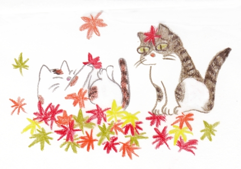 Maples and cats