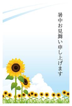 向日葵和天空在炎热的夏天背景03