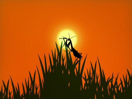 Sunset and mantis