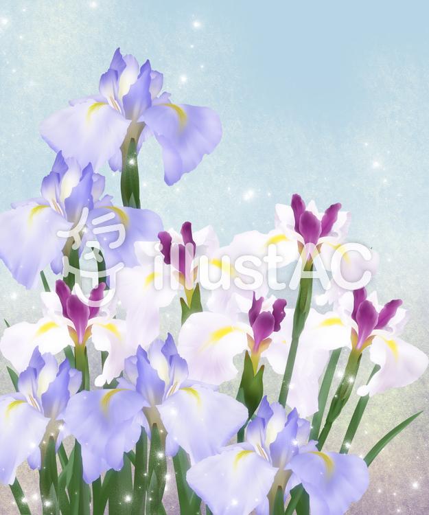 【フリーイラスト素材】お花・花菖蒲3
