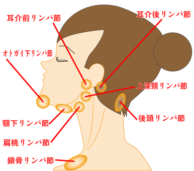 Position of lymph nodes around the face