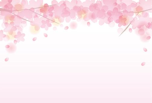 Sakura Sakura 17 - 21