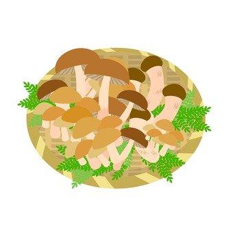 Mushroom big harvest