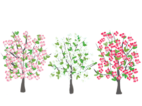 花水木 귀여운 나무 배경 흰색