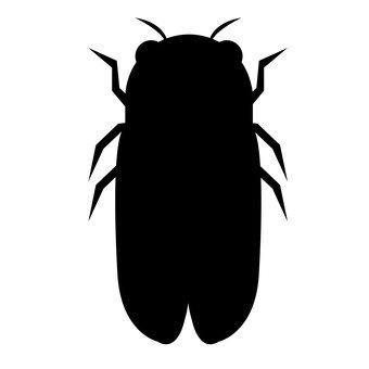 Cicadas silhouette
