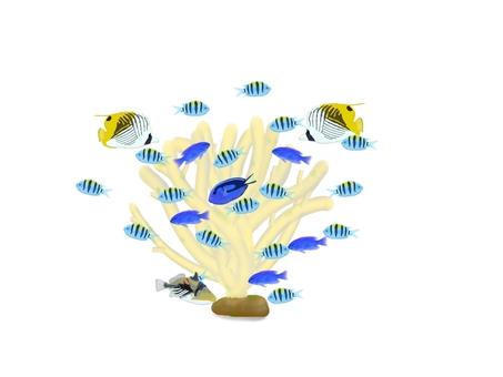 Fish swimming around the reef