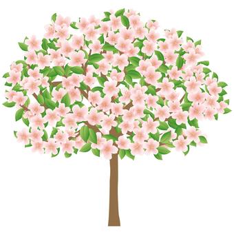 Leaf cherry tree