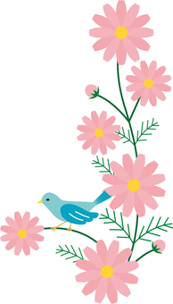코스모스와 작은 새