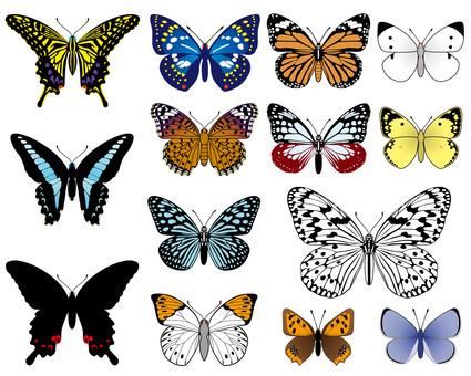 일본의 나비