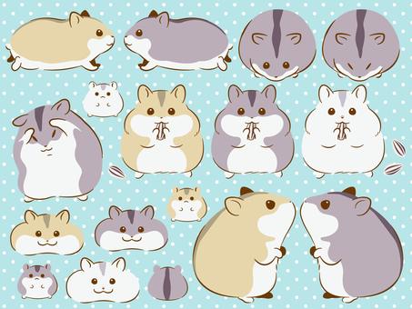 Djangarian hamster set
